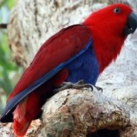 8 من أجمل أنواع الببغاء الملونة بالصور