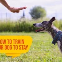 كيفية تدريب الكلاب بشكل جيد