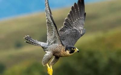 10 من أسرع الطيور في العالم بالصور