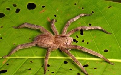 أخطر 10 عناكب في العالم بالصور