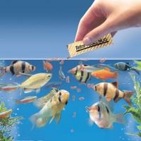 كيفية إطعام أسماك الزينة بشكل صحيح
