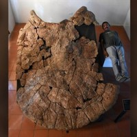 هل تعرف أكبر سلحفاة تم اكتشافها عبر التاريخ؟