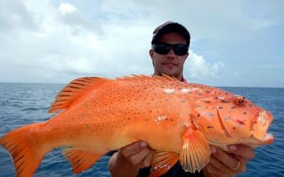 8 من أنواع أسماك البحر الأحمر العملاقة بالصور