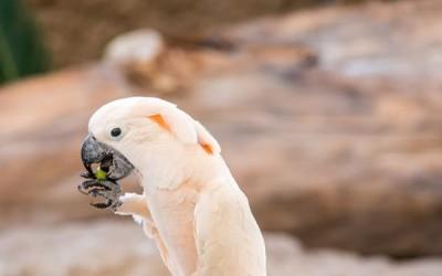 الأطعمة السامة التي يجب ألا تأكلها طيور الزينة أبداً
