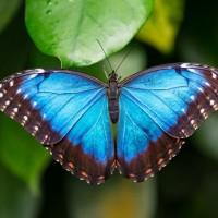 10 أنواع مختلفة من أنواع الفراشات