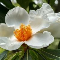 10 من أنواع الزهور النادرة في العالم