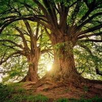 10 حقائق مذهلة عن الأشجار