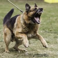 لماذا بعض الكلاب أكثر عدوانية من غيرها؟