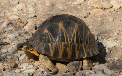 10 أنواع من السلاحف المهددة بالانقراض