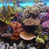 8 تقنيات إبداعية لضرورة المحافظة على الشعاب المرجانية حية