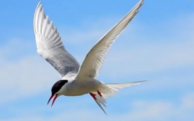11 نوع من أنواع الطيور المهاجرة الرائعة
