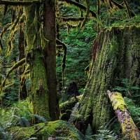 ما هي الغابات القديمة ولماذا هي مهمة؟